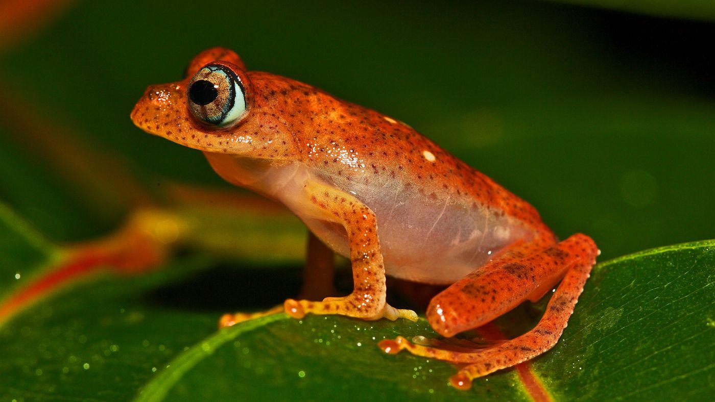 Madagaskar7
