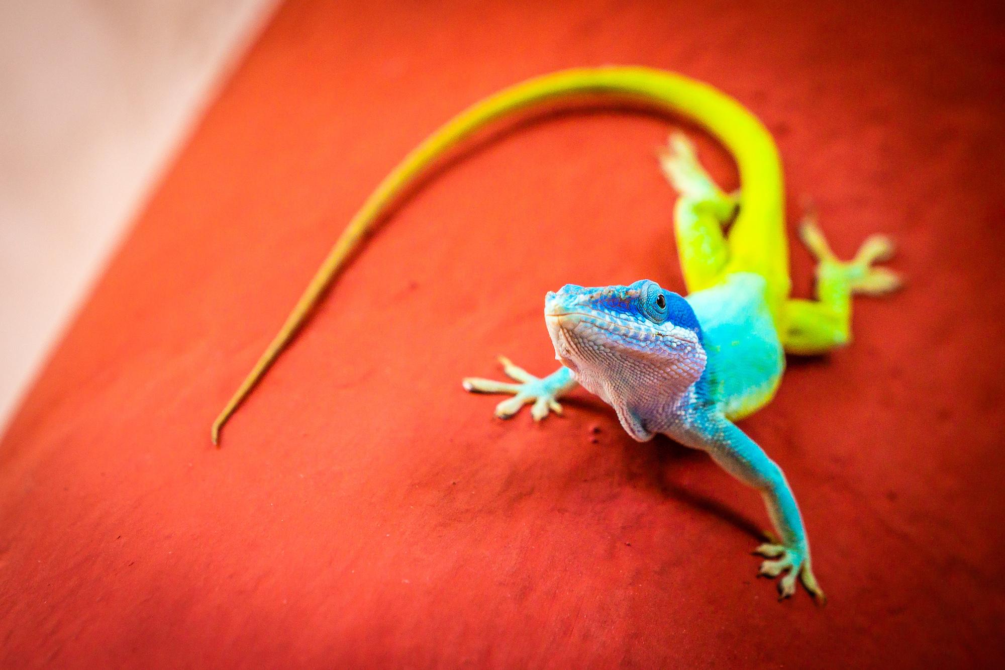 Titelfoto_Gecko